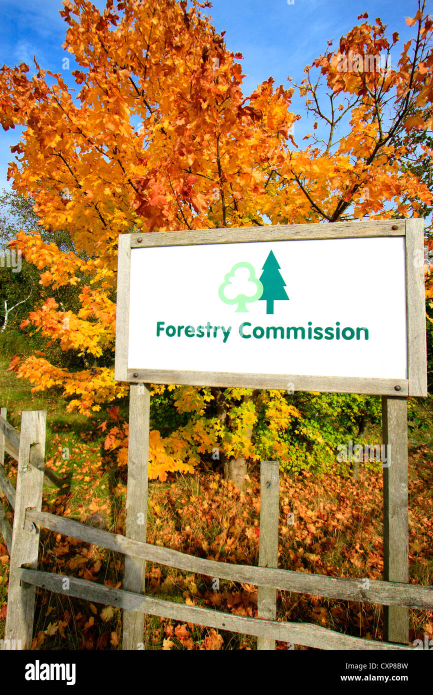 FORESTRY COMMISSION SIGN WITH A BACKDROP OF GOLDEN AUTUMN COLOURS. - Stock Image