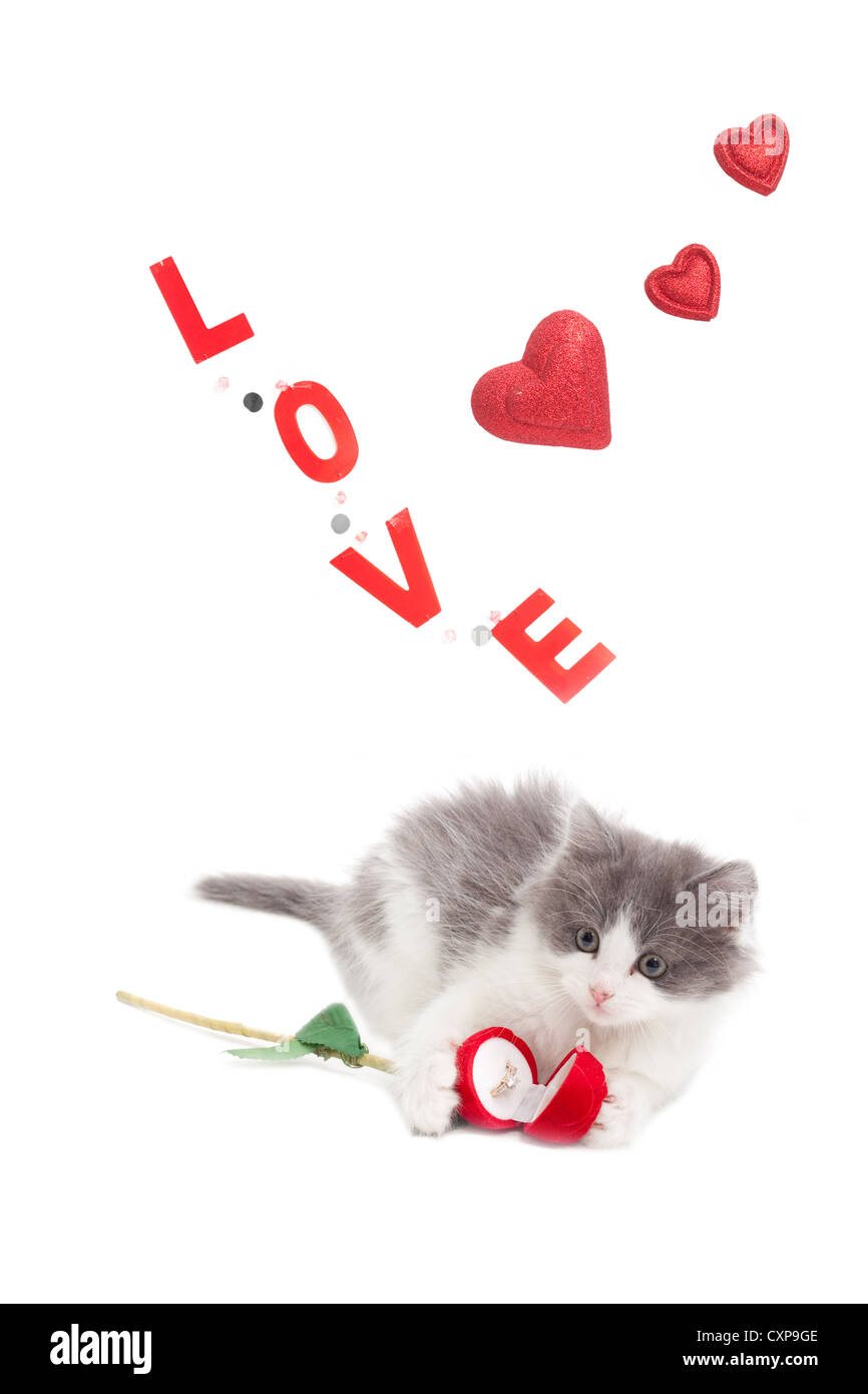 kitten holding an engagement ring for Valentine's day with the word Love and red hearts in the background Stock Photo