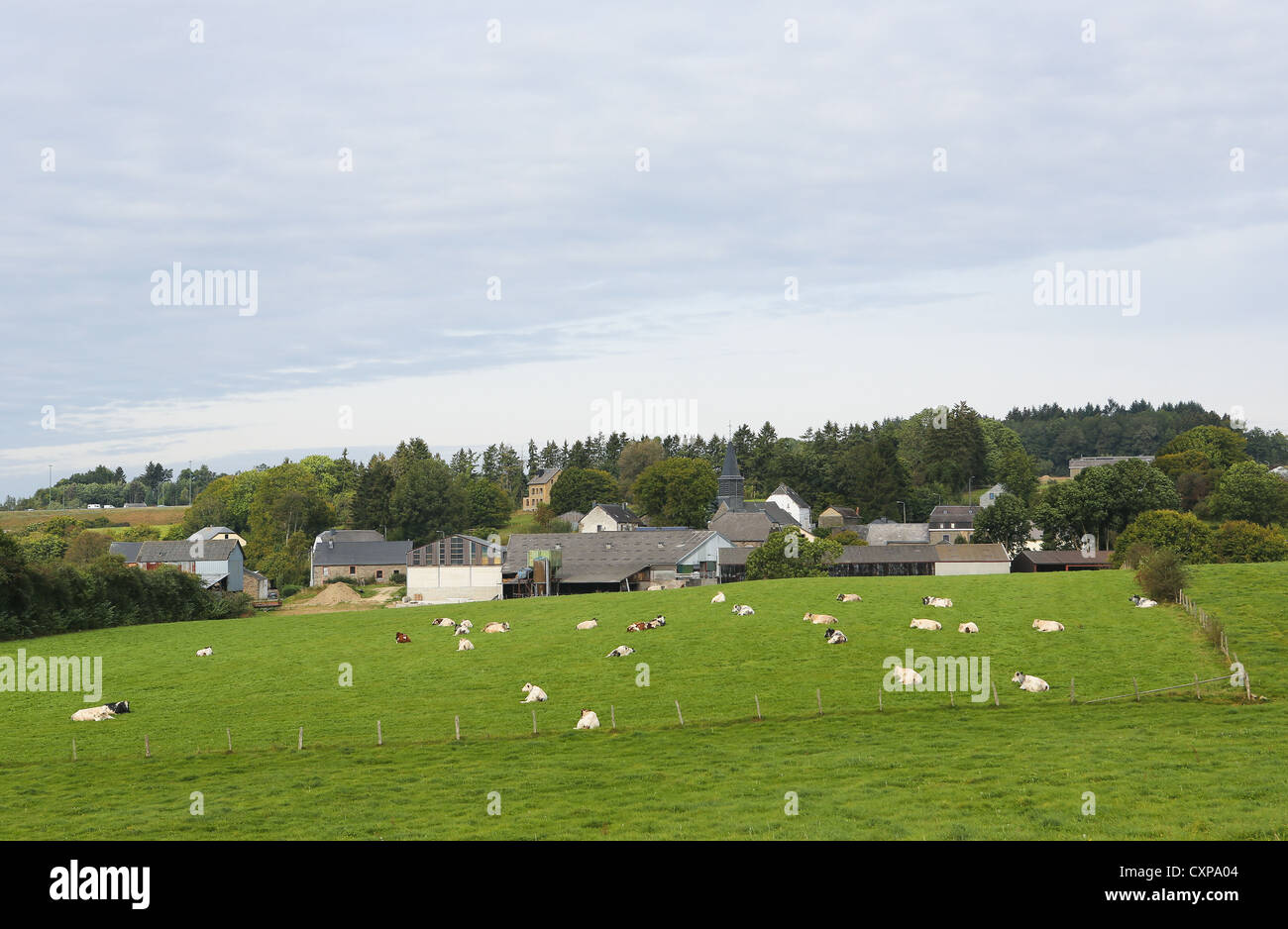 Houses and cows in Houffalize in the Ardennes, Wallonia, Belgium - Stock Image