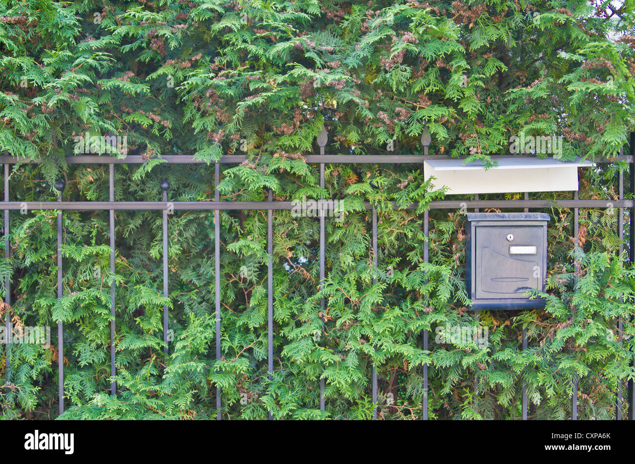 mailbox on green background with textspace - Stock Image