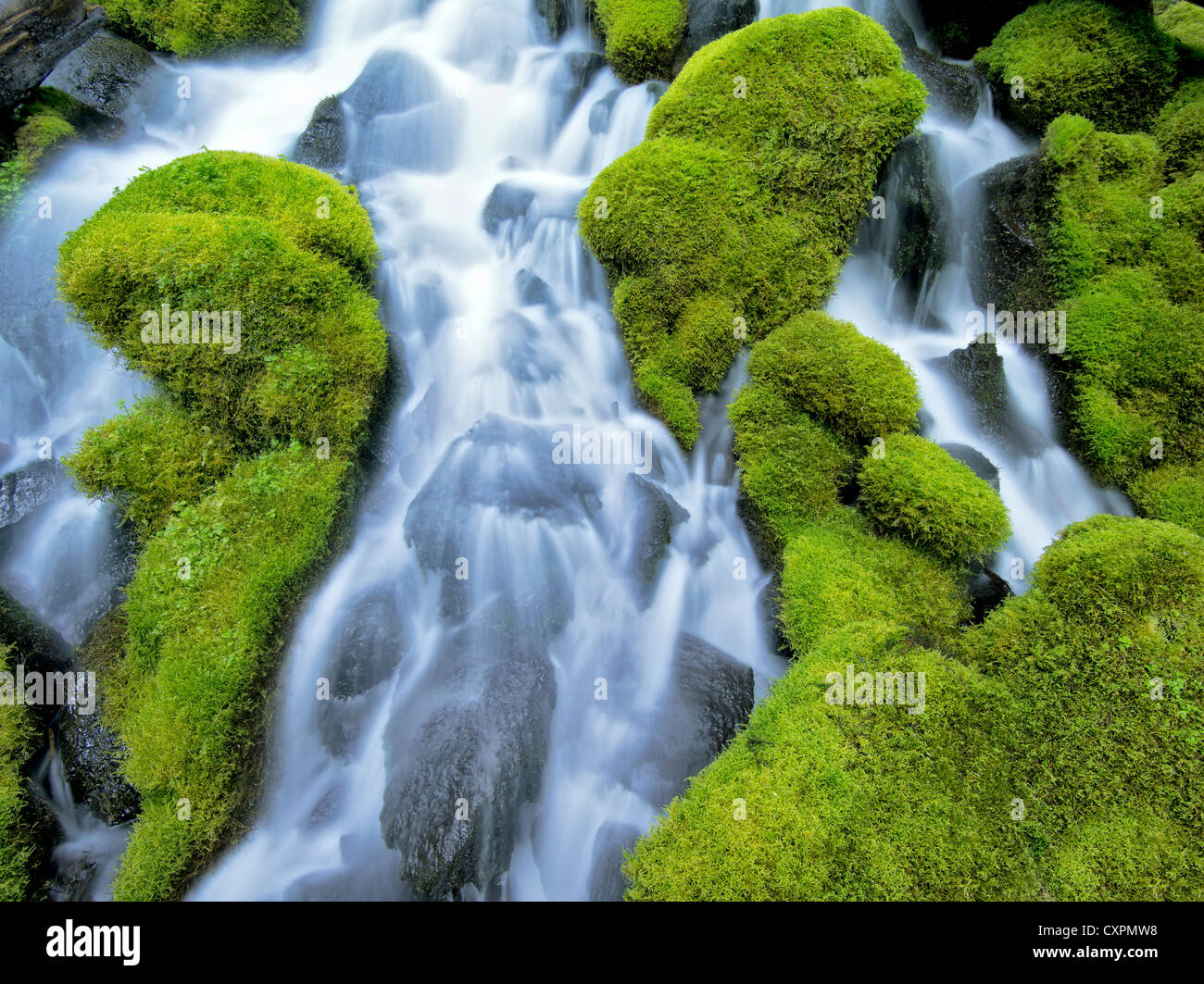 Clearwater falls with moss. Umpqua National Forest, Oregon - Stock Image