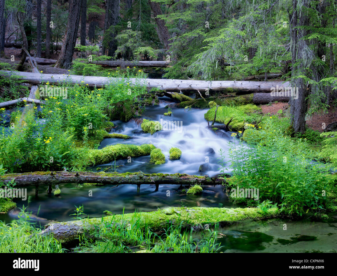 Clearwater Creek. Umpqua Natioanl Forest, Oregon Spring creek with new spring growth Stock Photo