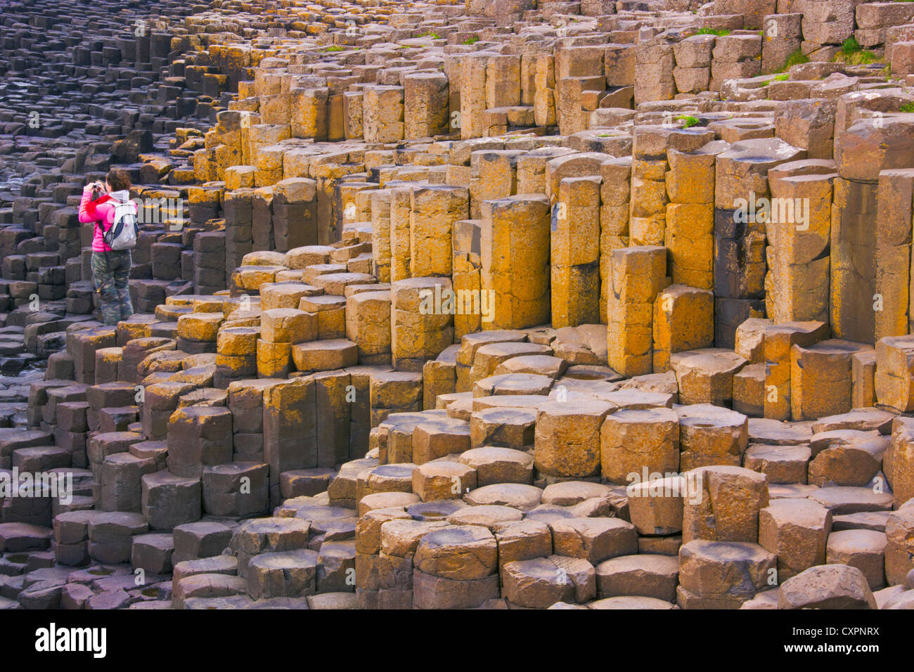 Tourist photographing Basalt Rock Formation, Giant's Causeway, County Antrim, Northern Ireland, United Kingdom, - Stock Image