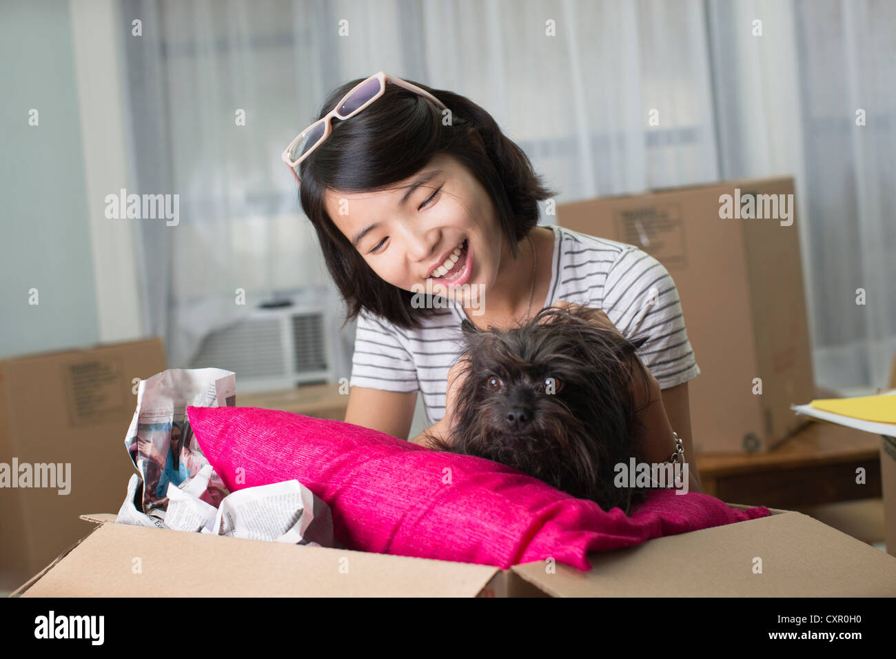 Young woman with pet dog in moving box - Stock Image