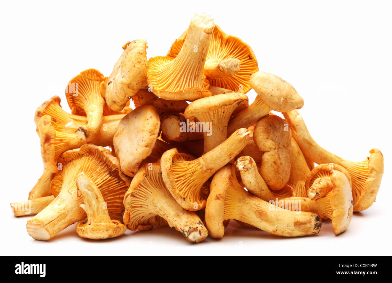 Chanterelles mushrooms on a white background. - Stock Image