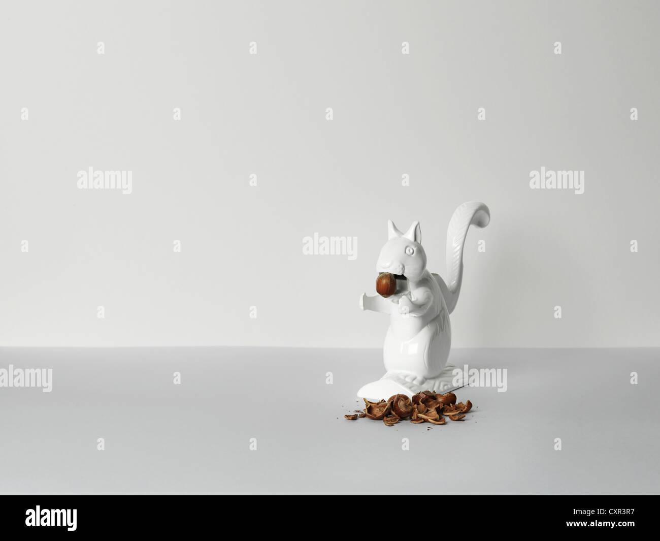 Nutcracker squirrel feeding on hazlenuts - Stock Image