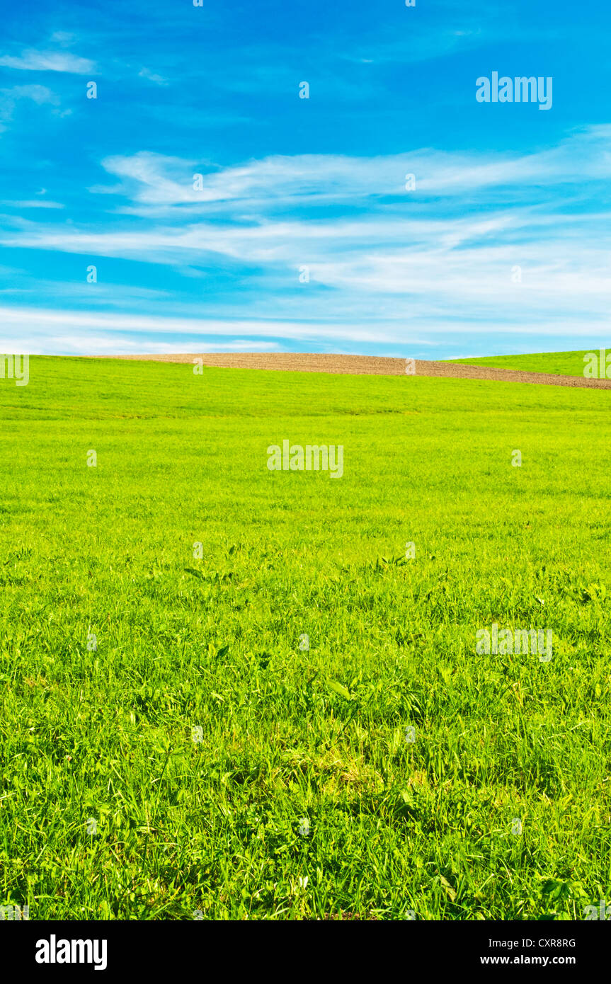 green with blue sky and clouds - Stock Image