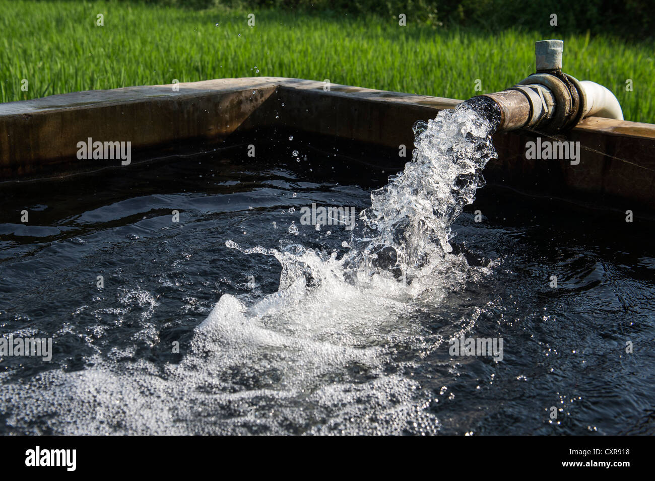 Water being pumped to a storage tank before going onto a rice paddy for irrigation. Andhra Pradesh, India - Stock Image
