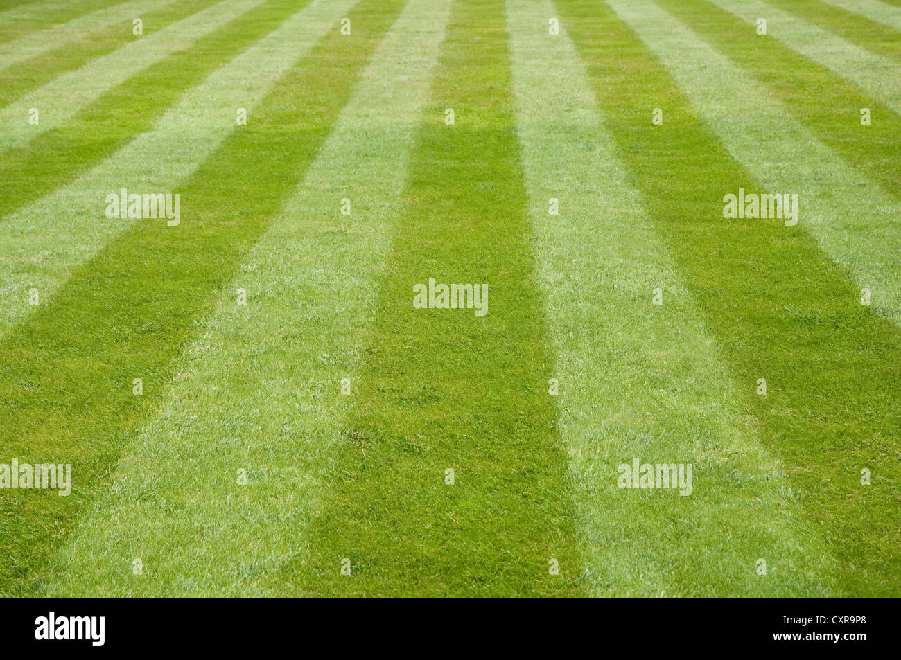 Stripes on a Lawn. - Stock Image