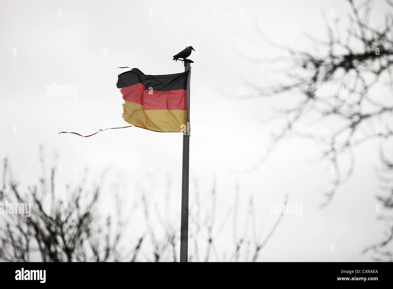 Torn German flag with a crow on the flagpole - Stock Image