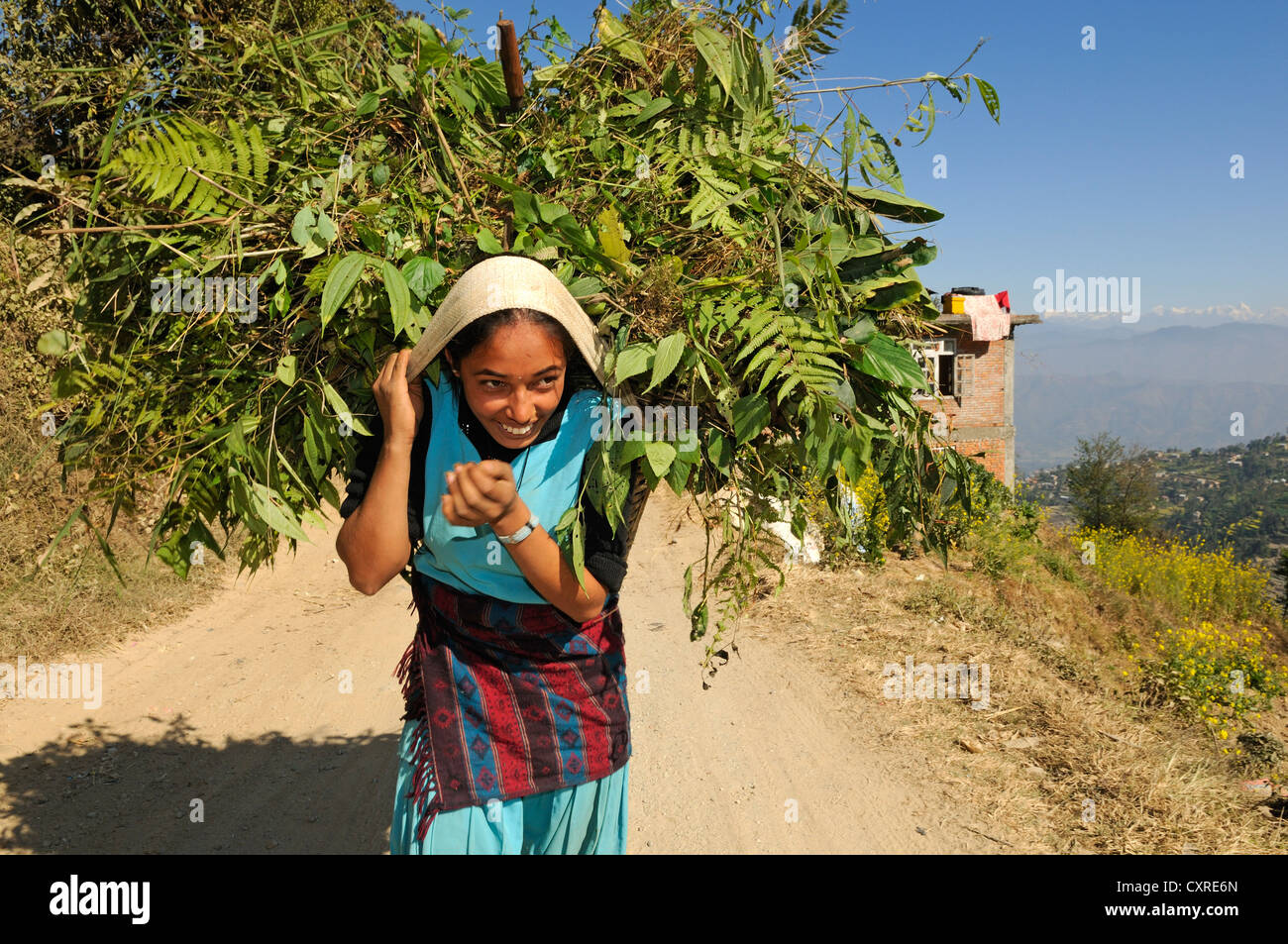 Nepali farmer carrying feeding grass, Kathmandu Valley, UNESCO World Heritage Site, Nepal, Asia - Stock Image