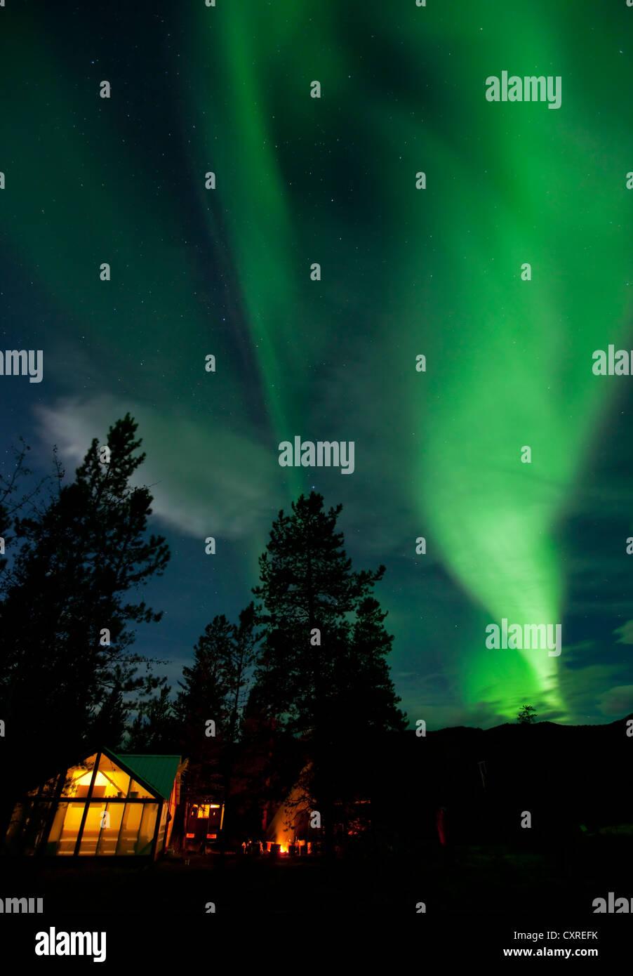 Illuminated wall tent, cabin, green northern polar lights, Aurora borealis, spruce trees, near Whitehorse, Yukon Stock Photo