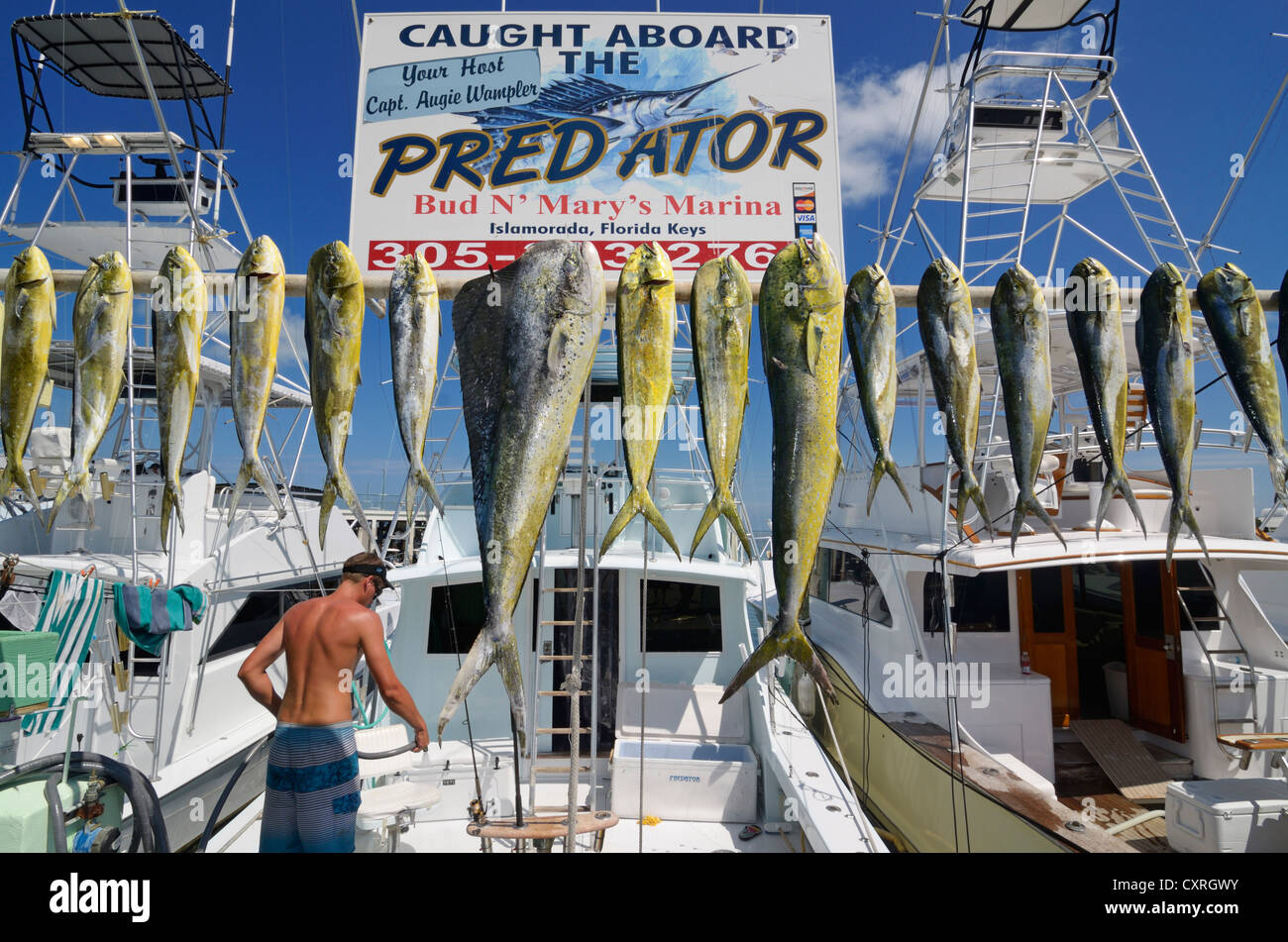 Deep-sea fishermen near the Holiday Isle Marina with their catch, Islamorada, Whale Keys, Florida, USA - Stock Image
