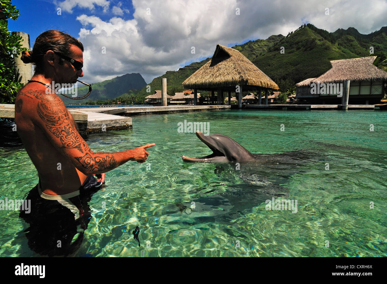 Moorea Dolphin Center, Hotel Intercontinental, Westward Islands, Society Islands, French Polynesia, Pacific Ocean - Stock Image
