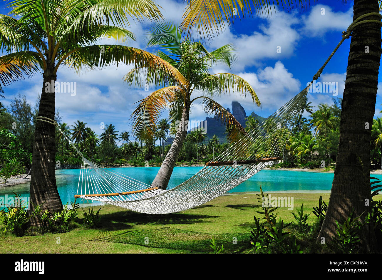 Hammock between palm trees, St. Regis Bora Bora Resort, Bora Bora, Leeward Islands, Society Islands, French Polynesia - Stock Image