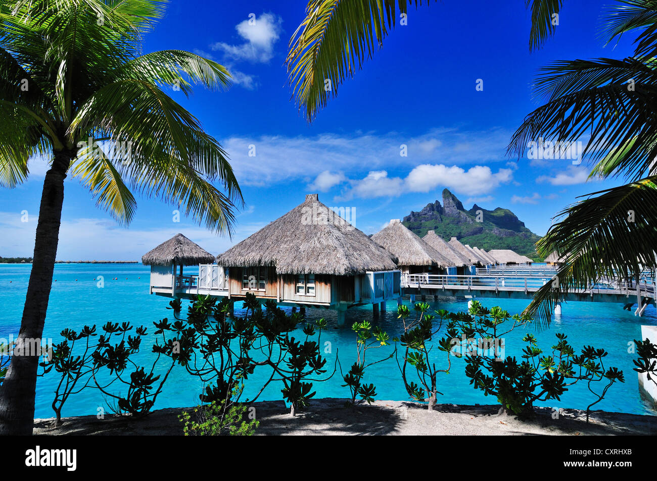 St regis bora bora resort bora bora leeward islands for What to buy in bora bora