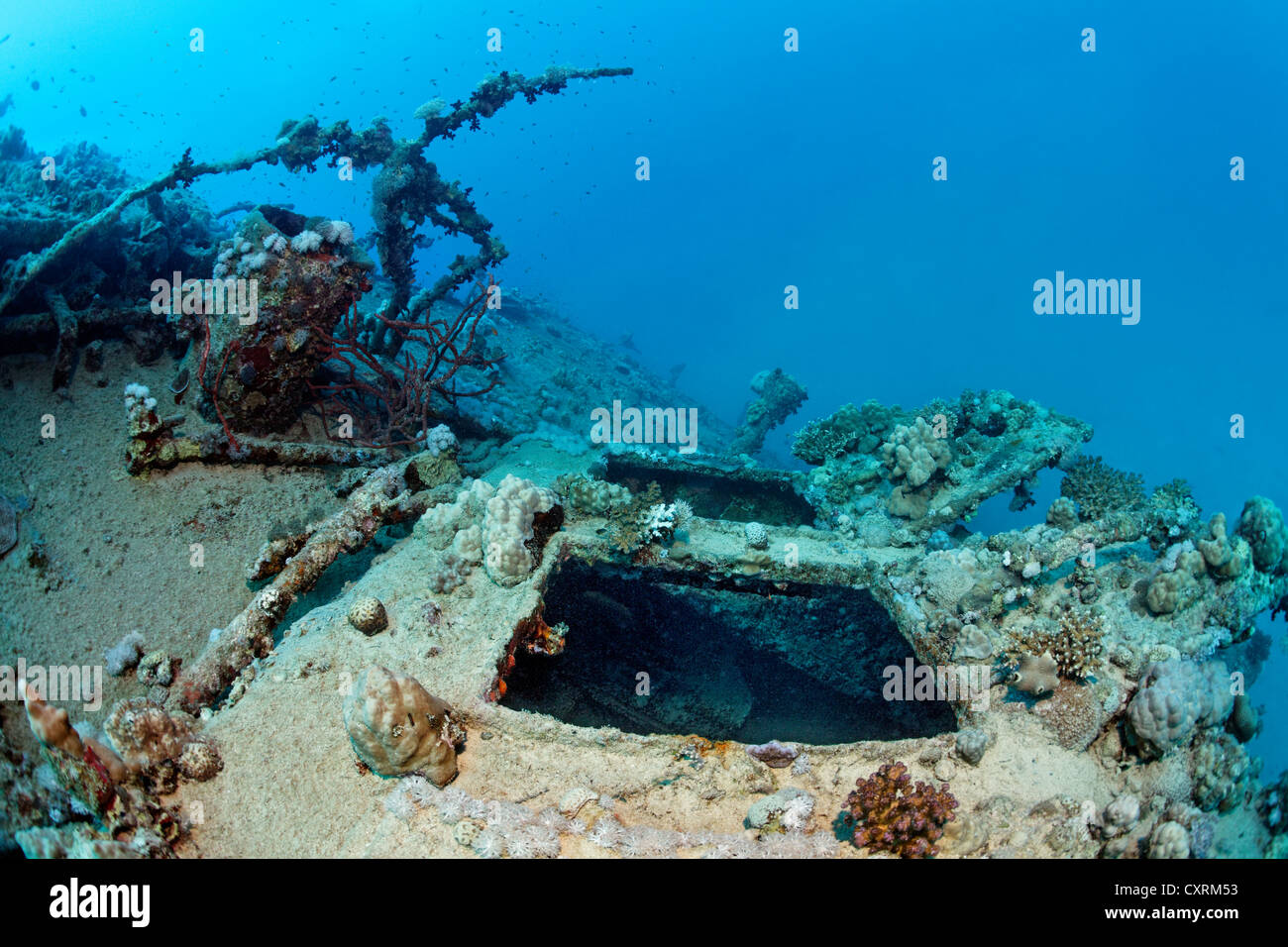 Open hatch overgrown with corals, shipwreck, tanker, S.S. Turbo, build 1912, sank on 4/4/1942 during World War II - Stock Image