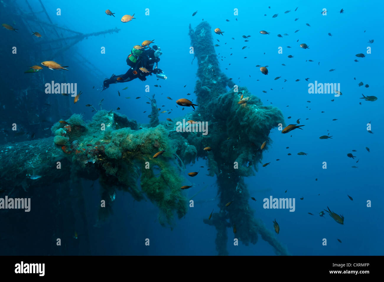 Scuba diver exploring the mast surrounded by damselfish (Chromis chromis), wreck of the Zenobia, Cyprus, Asia, Europe - Stock Image