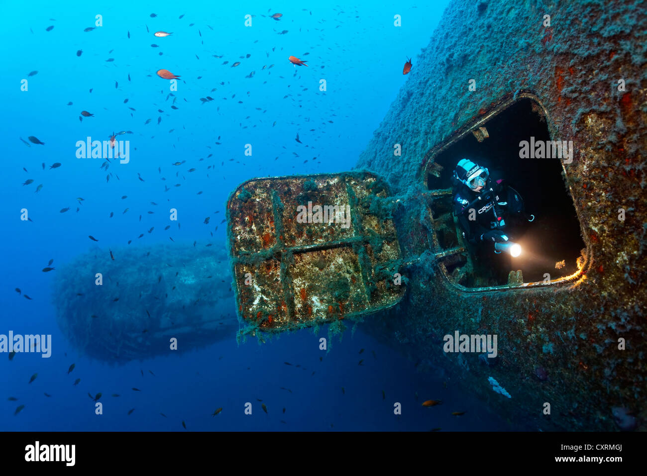 Scuba diver emerging from the hatch at the bow, Damselfish (Chromis chromis), wreck of the Zenobia, Cyprus, Asia, - Stock Image
