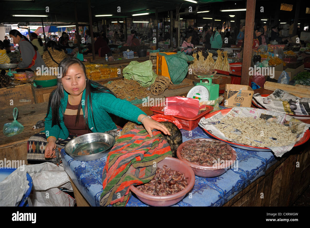 Sales of songbirds as meat, woman trying to cover her goods with a cloth, because the sale is illegal, weekly market - Stock Image