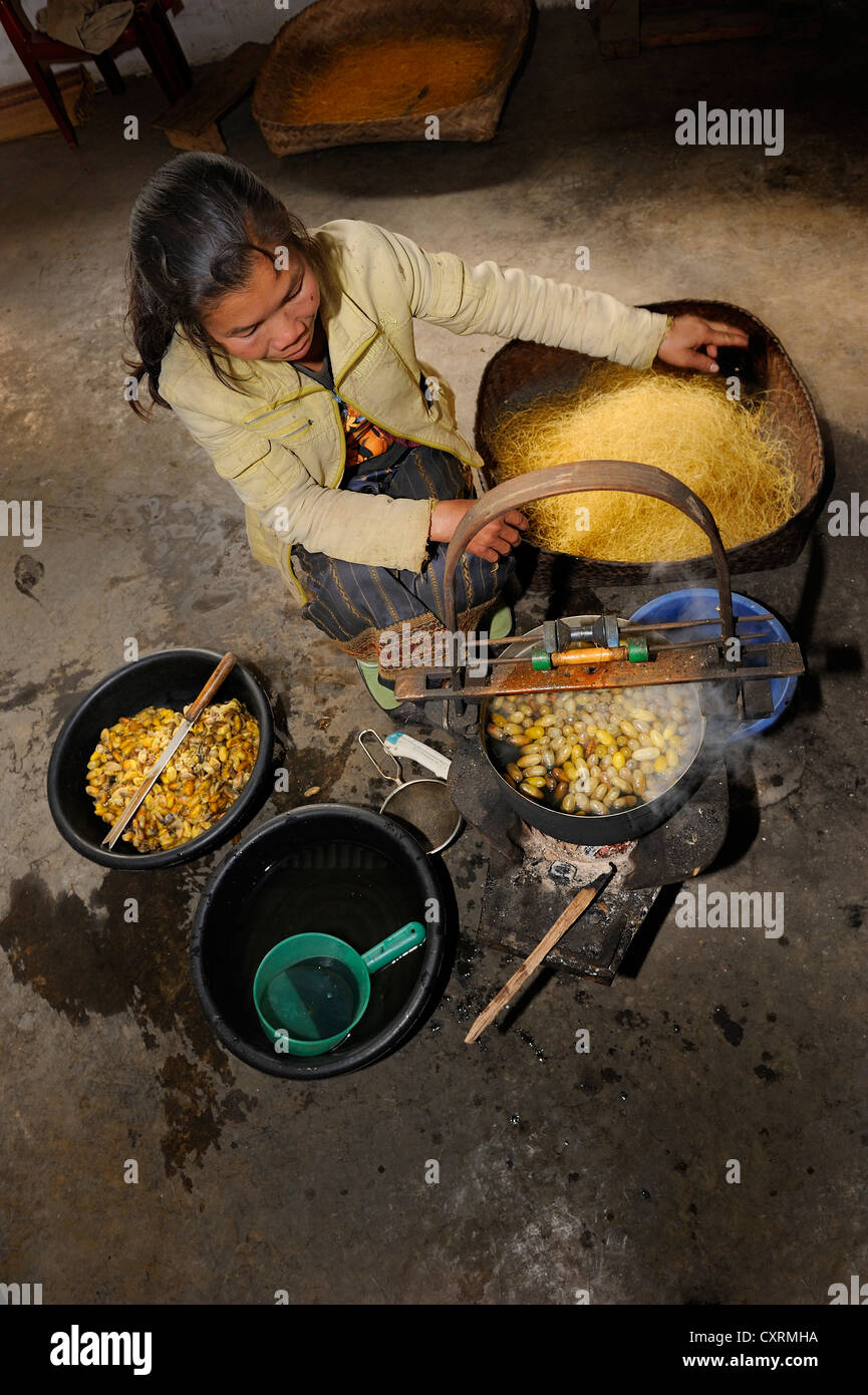 Silk threats are spun from the pupae of the silkworm in a silk factory near the town of Phanasavan, Laos, Southeast - Stock Image