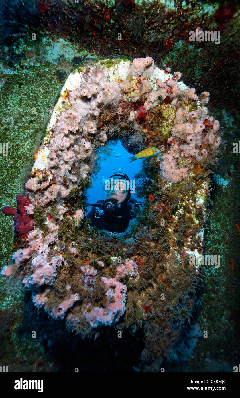 Scuba diver looking through the anchor hawse hole at the bow, ship wreck of the Zenobia, Cyprus, Asia, Europe, Mediterranean - Stock Image