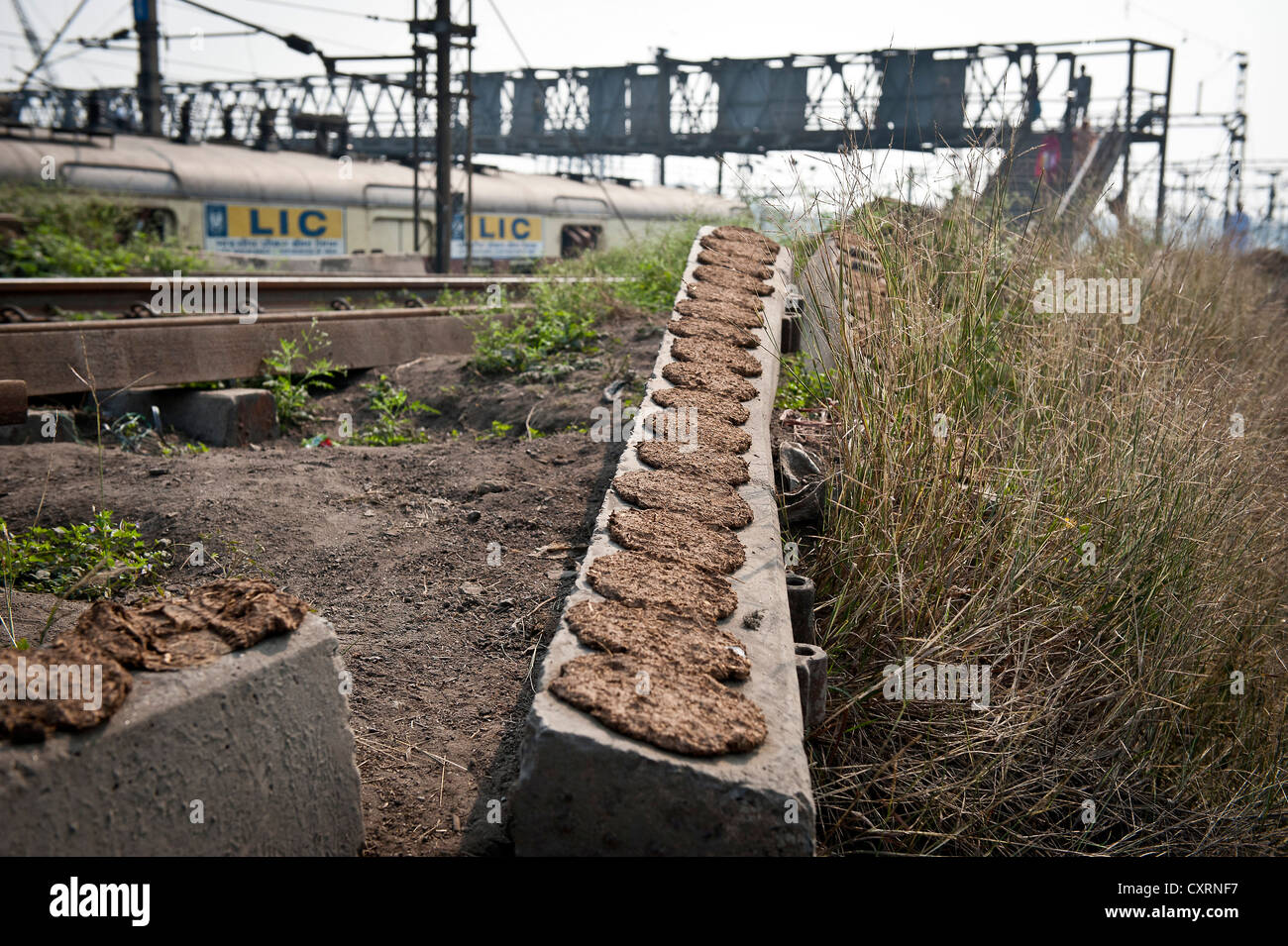 Cow dung laid out for drying in an old railway sleeper, Shibpur district, Haora or Howrah, Kolkata or Calcutta, - Stock Image