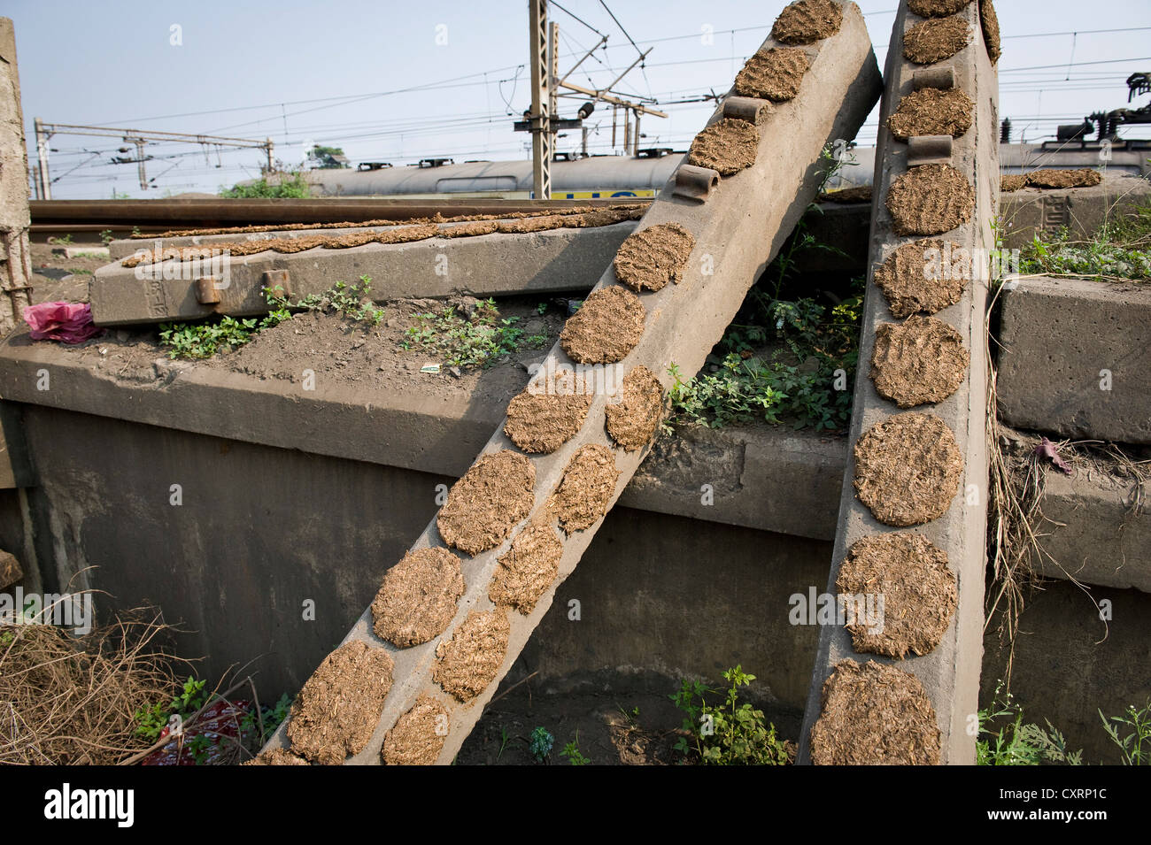Cow dung is being dried on railway sleepers to be used as fuel, Shibpur district, Haora or Howrah, Calcutta, , India, - Stock Image