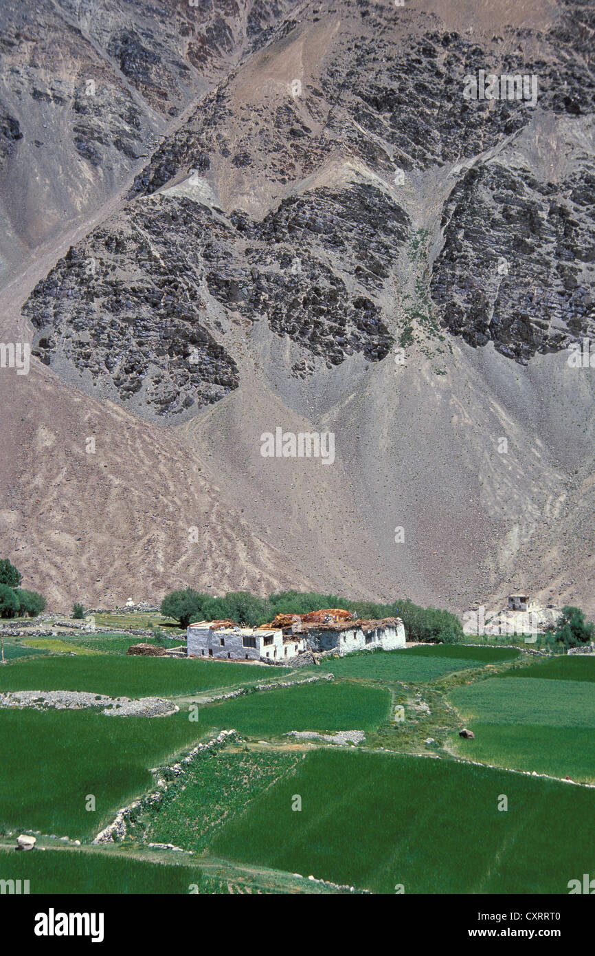 Farm Tibetan Design Fields Houses Zanskar Ladakh Indian Himalayas Jammu And Kashmir North India Asia