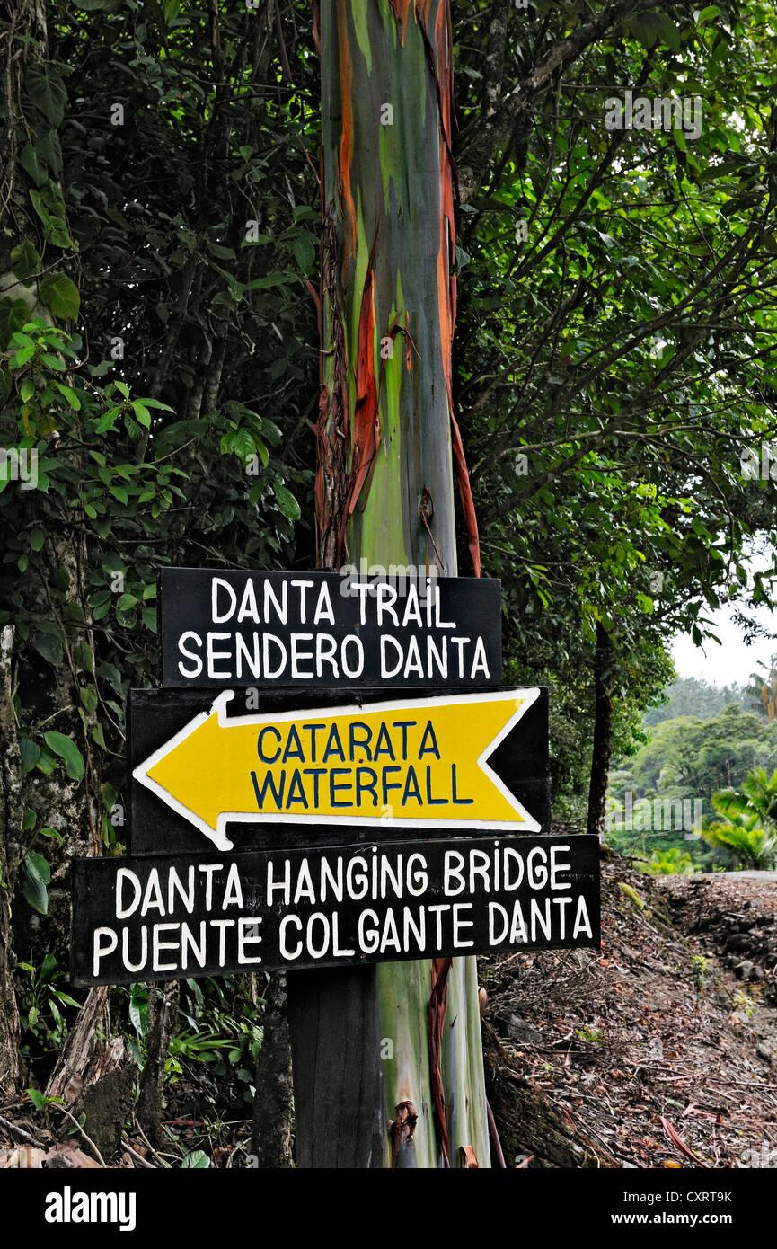Sign to Catarata Waterfall on a Eucalyptus tree or Blue Gum (Eucalyptus), Alajuela Province, Costa Rica, Central - Stock Image