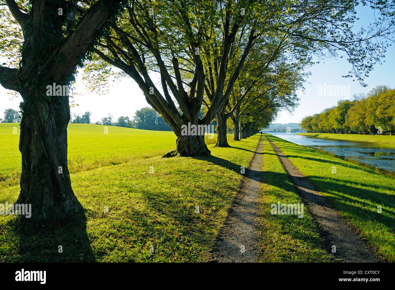 Path and row of trees at the water on Herreninsel island, Lake Chiemsee, Chiemgau region, Bavaria, Germany, Europe - Stock Image