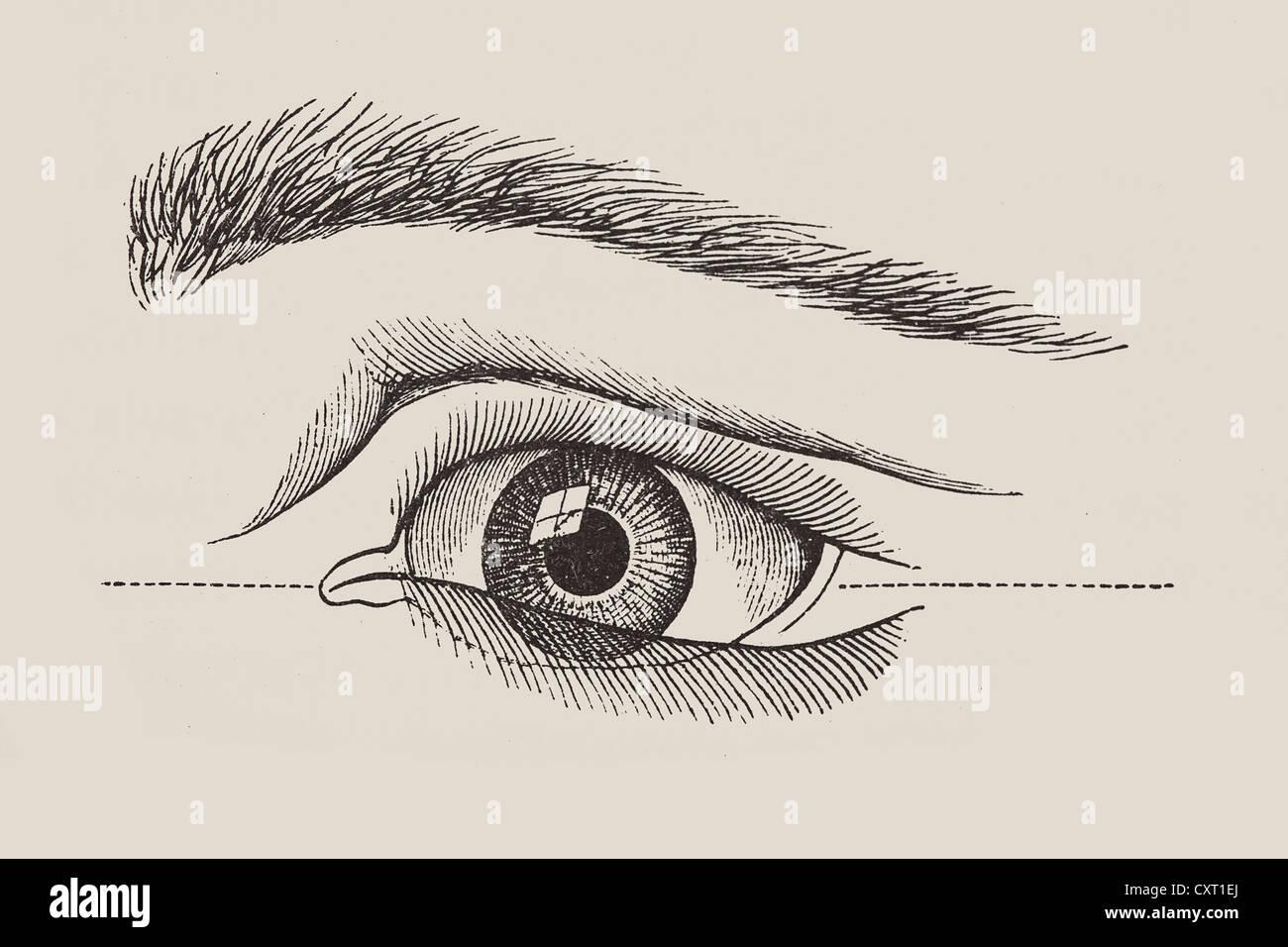 Anatomical Drawing Eye Eyes Stock Photos & Anatomical Drawing Eye ...
