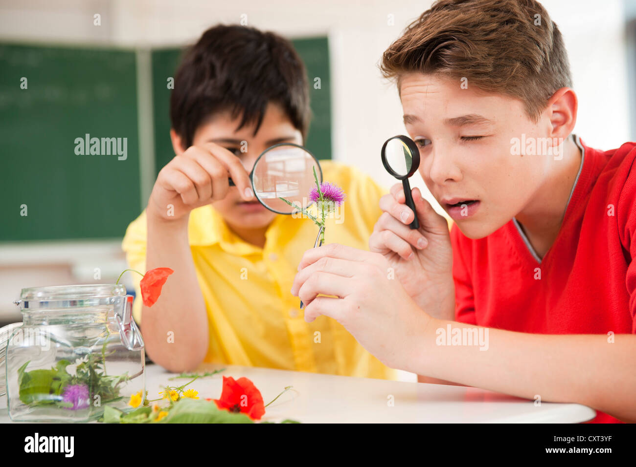 Schoolchildren studying plants during a biology lesson - Stock Image