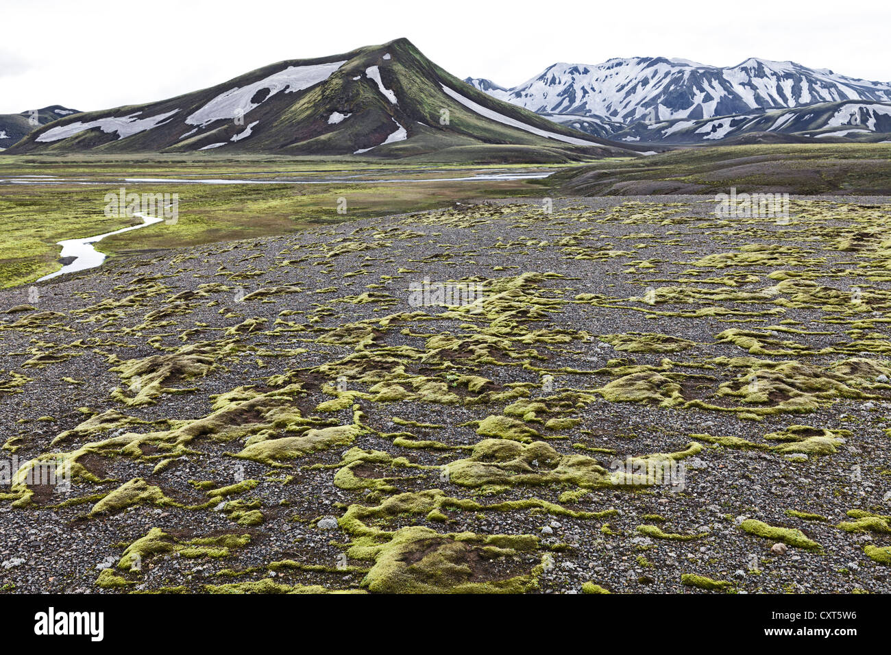Shreds of moss covered the lava surfaces on a plateau in Fjallabak Nature Reserve, Highlands, Iceland, Europe Stock Photo