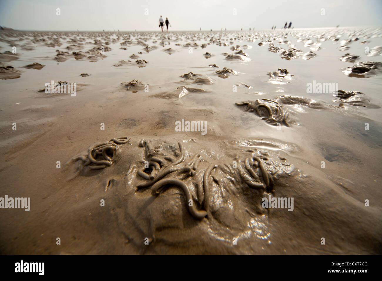 Lugworms and tourists on the mud flats during low tide, Wadden Sea, UNESCO World Heritage Site, Buesum, Dithmarschen - Stock Image