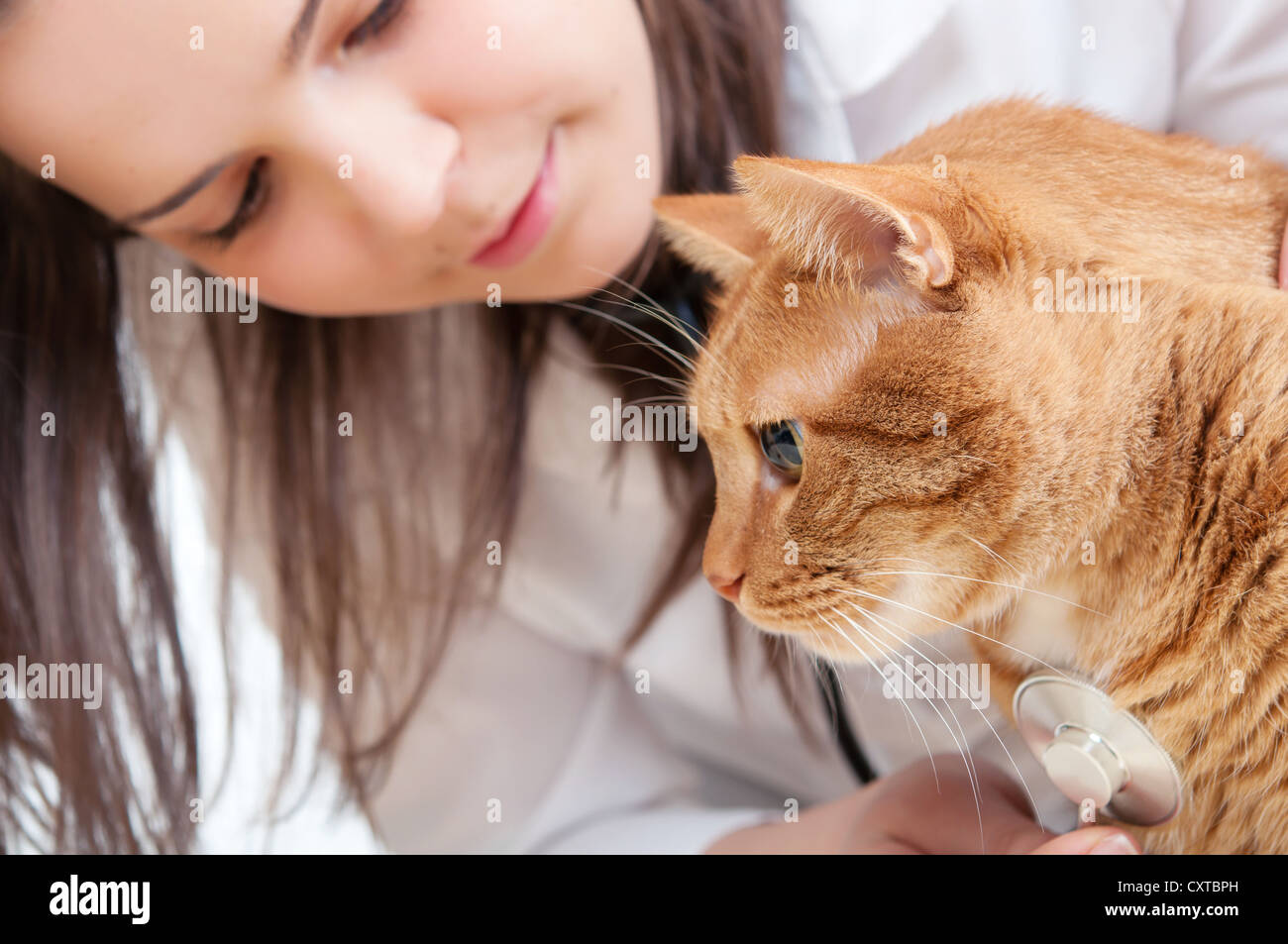 cat and vet - Stock Image