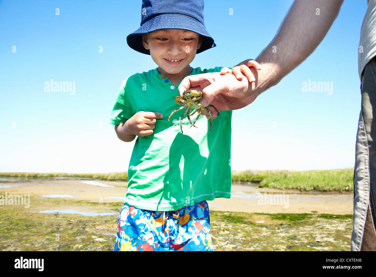 Boy examining crab in fathers hand - Stock Image