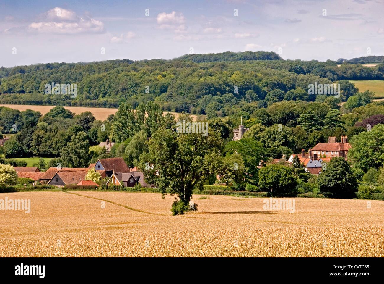Bucks - Chiltern Hills - wheat field in high summer sunlight - Litte Missenden village beyond - wooded hillsides - Stock Image