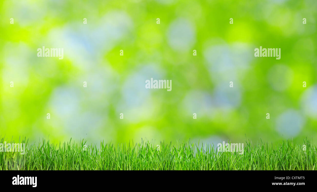 Natural green a blurred background - Stock Image
