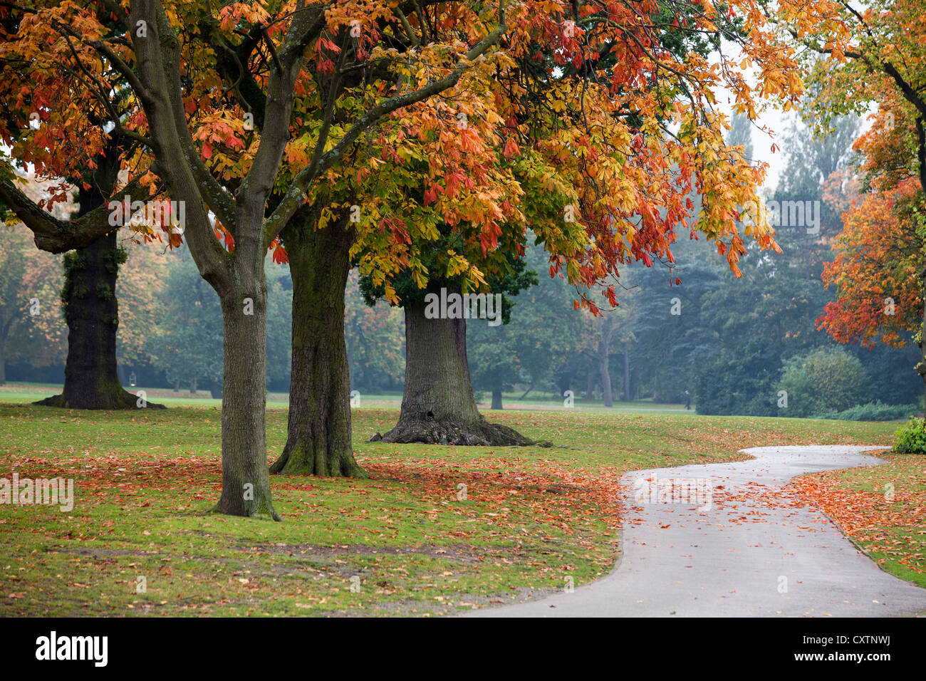 Autumn leaves in Cannon Hill park in Birmingham, UK - Stock Image