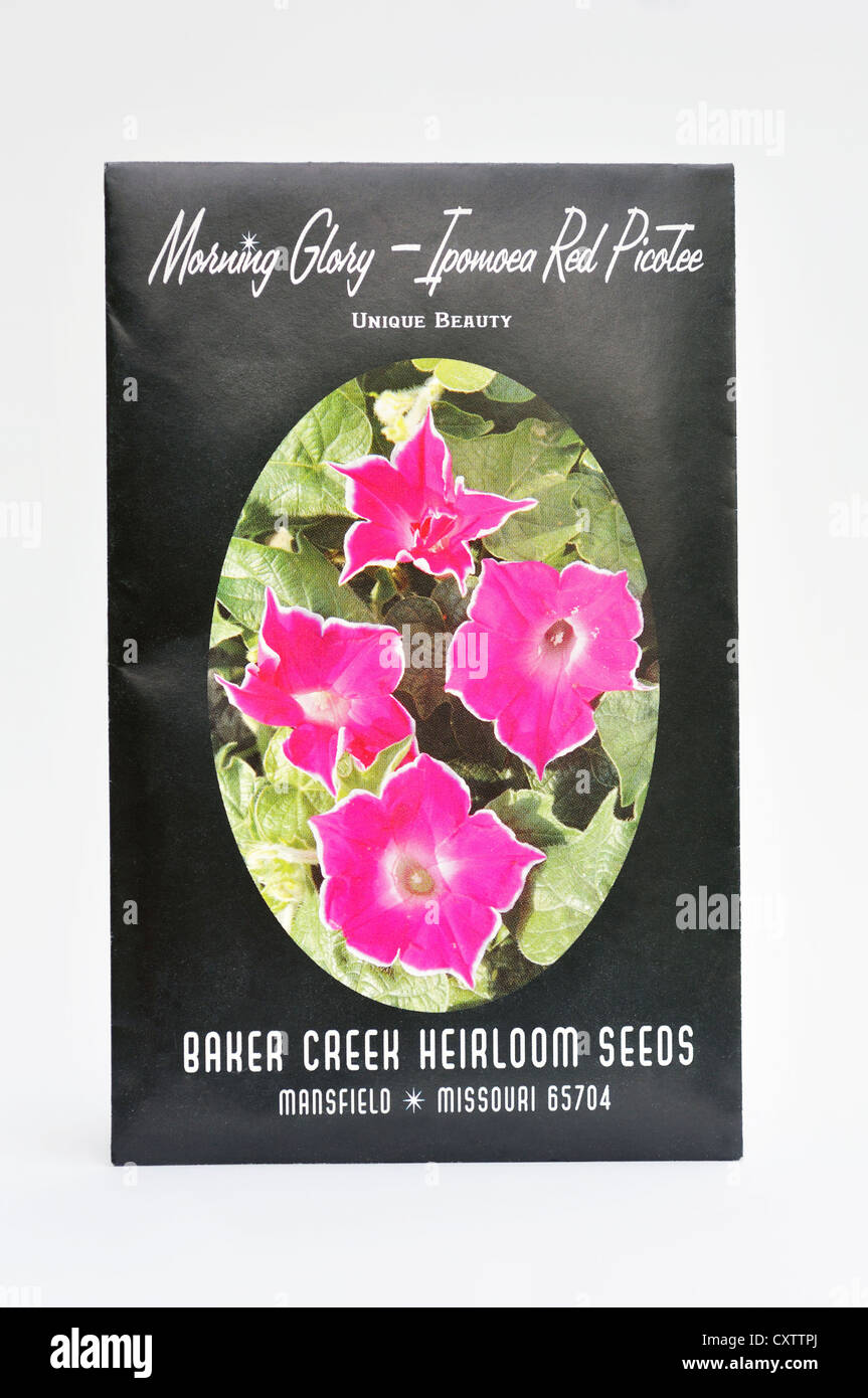 Morning Glory Scarlet 20 Seeds Rapid Grower,Stunning Red Flowers Ipomea