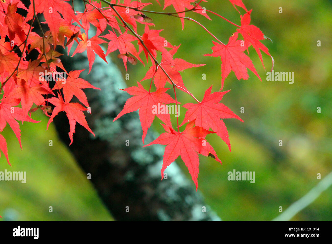Autumn Leaf Color Lake Sai Ko Stock Photos & Autumn Leaf Color Lake ...