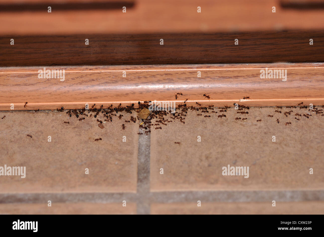 Carpenter Ants And Cat Food