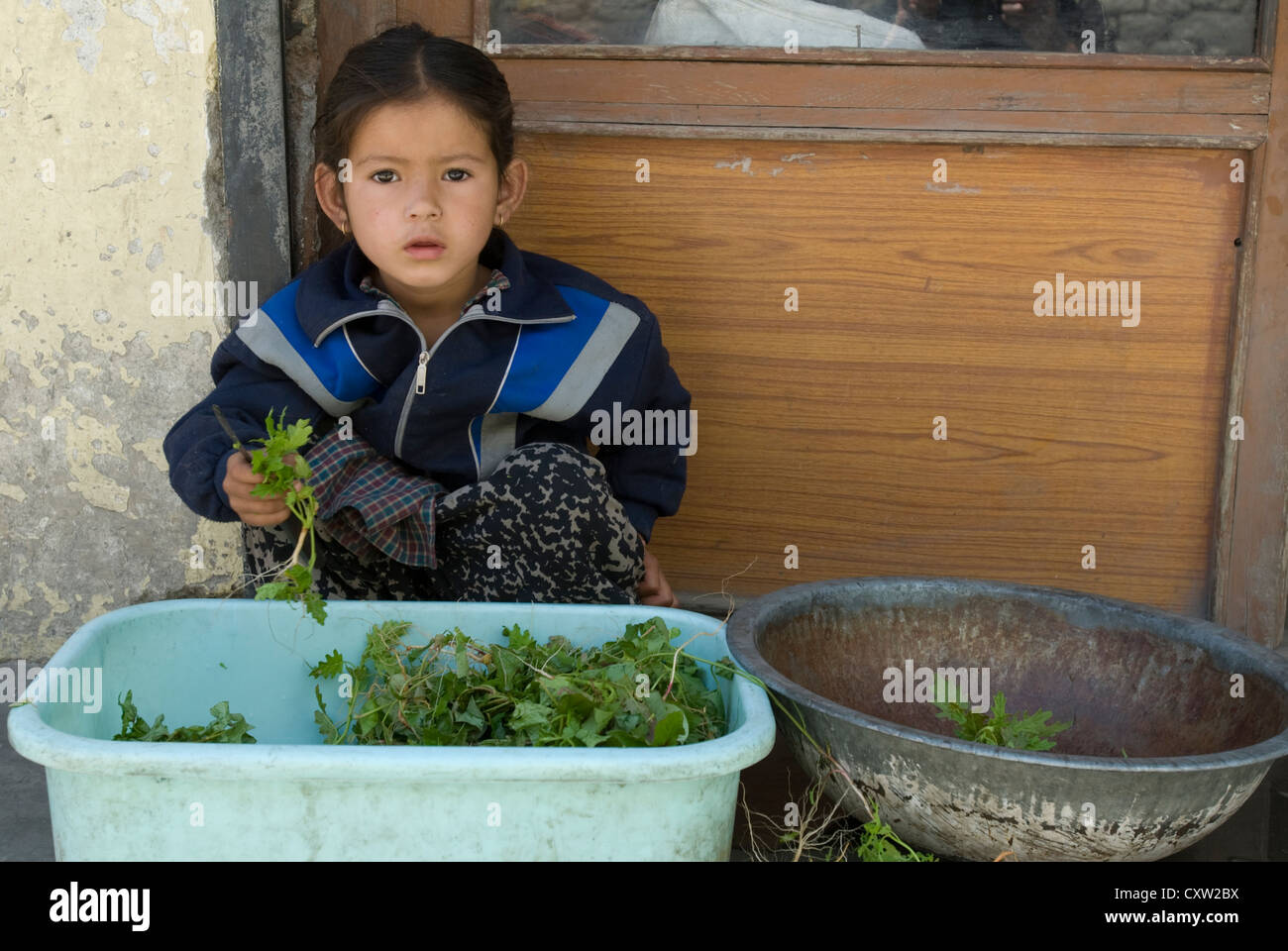 A girl pauses from cutting herbs in the Himalayan town of Keylong, India - Stock Image
