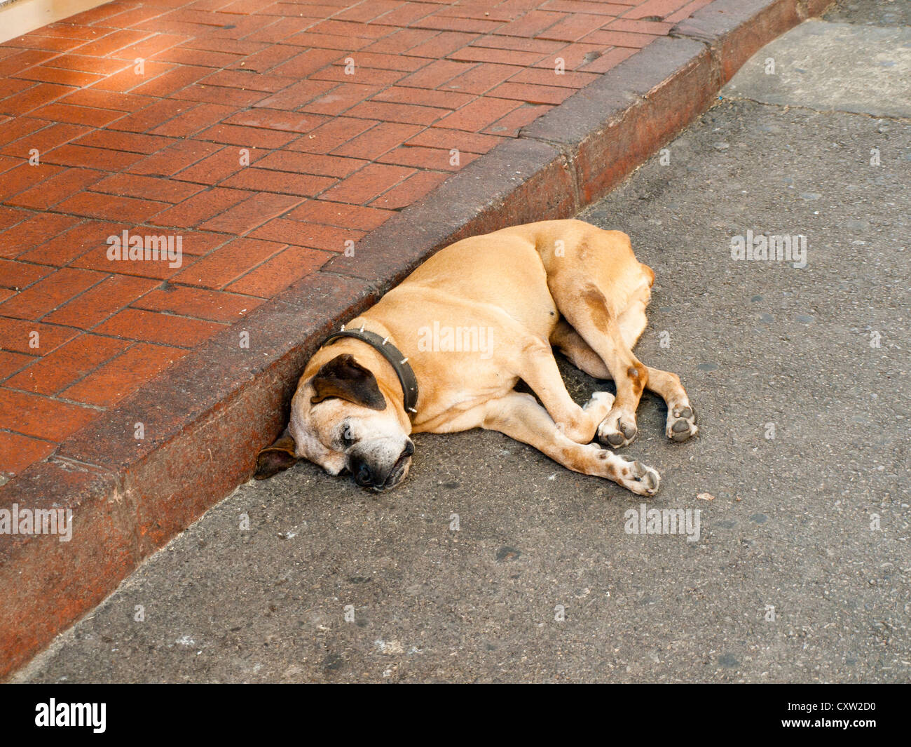 dormant dog diagonal, or let sleeping dogs lie.One of many lazy dogs in Buyukada Turkey - Stock Image