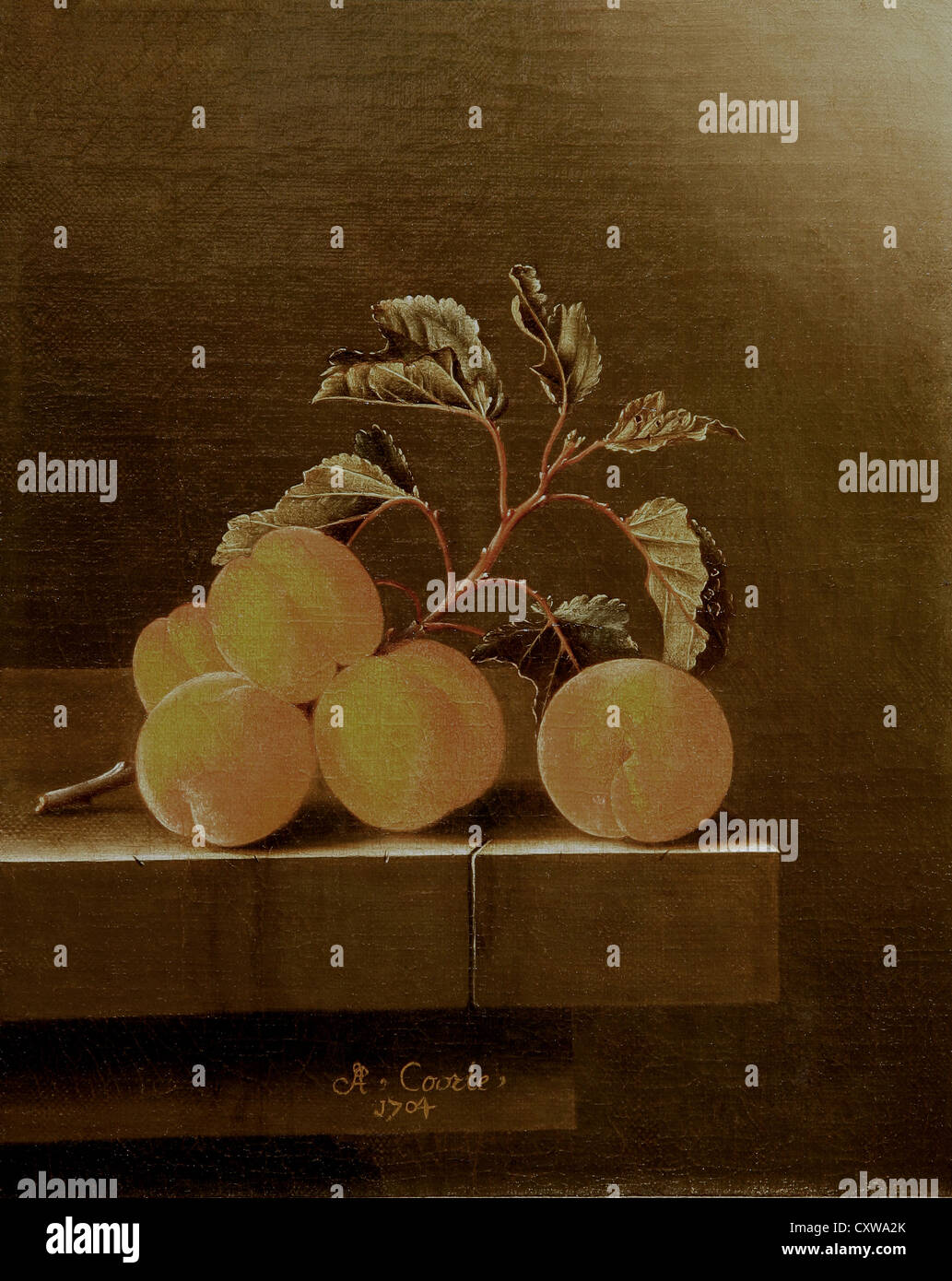 Adriaen Coorte,Still life with five apricots,1704 - Stock Image