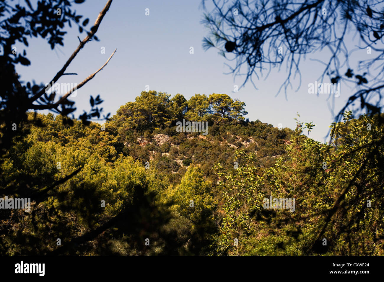 Aleppo Pine forest growing on limestone rock Mljet National Park Polace Mljet Island Dalmatia Croatia - Stock Image
