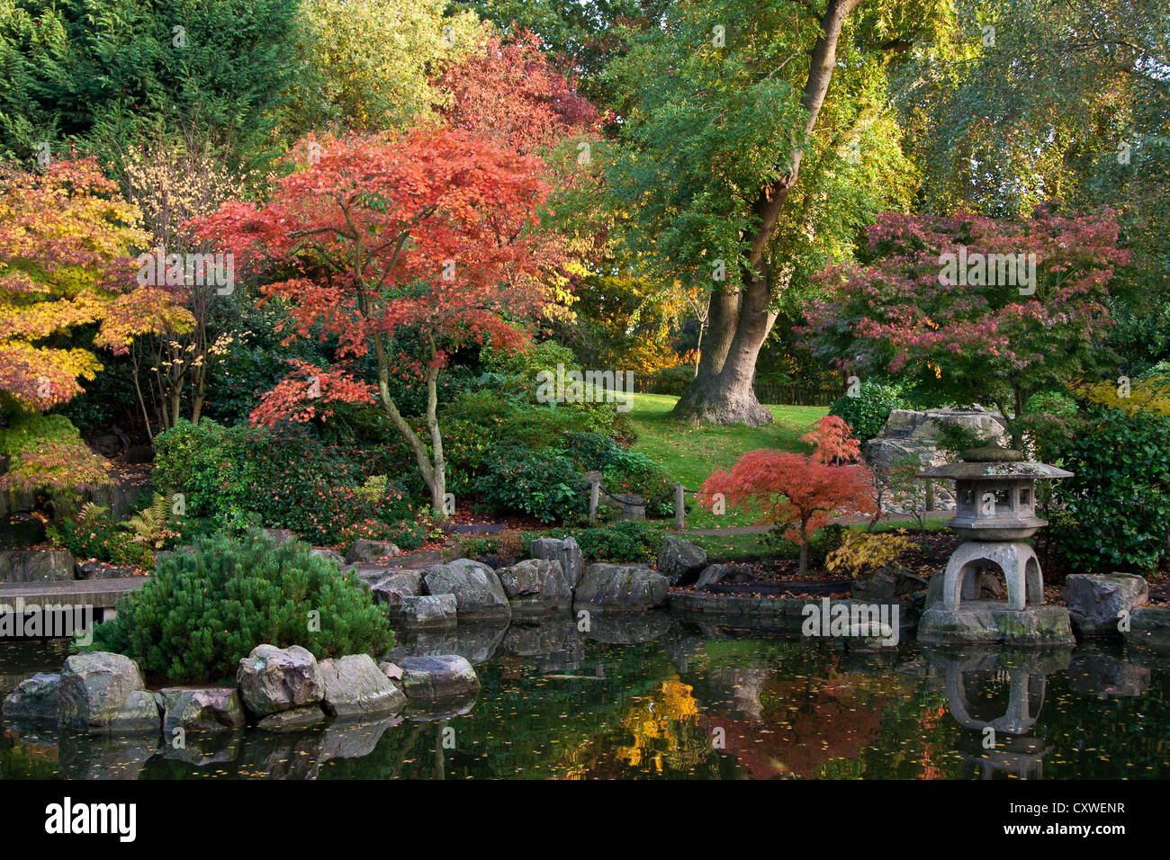 Maple Trees Ablaze In Autumn In Japanese Garden Holland Park
