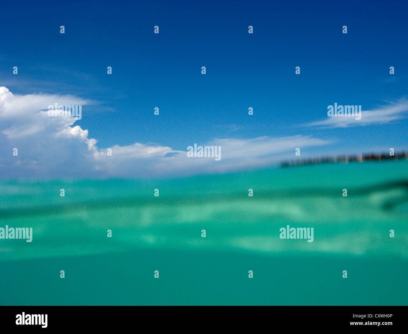 floating at water level in the dry tortugas florida keys usa Stock Photo