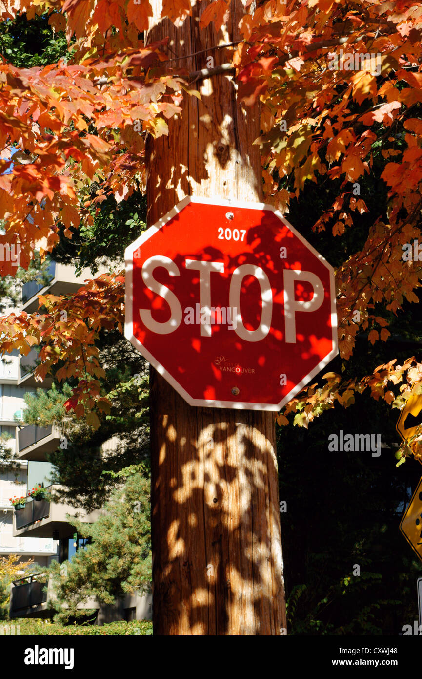 Stop sign surrounded by colorful autumn leaves, Vancouver, British Columbia, Canada - Stock Image